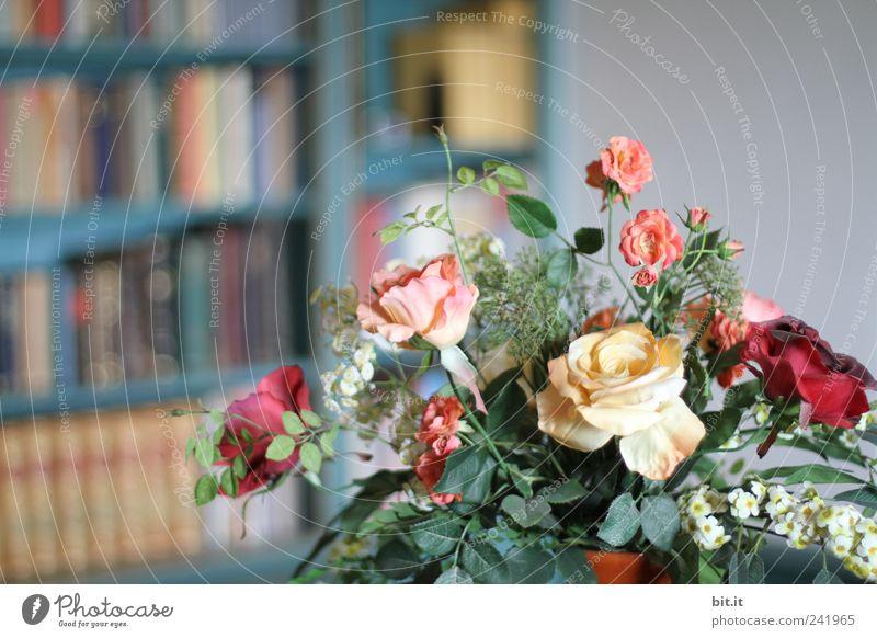 Relaxation Flower Calm Blossom Style Feasts & Celebrations School Flat (apartment) Arrangement Decoration Birthday Book Wedding Culture Historic Kitsch