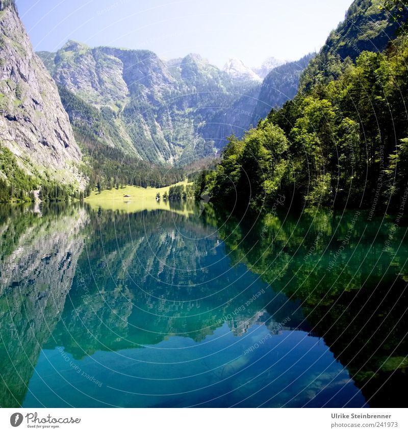 Watermirror Environment Nature Landscape Plant Elements Earth Air Sky Sunlight Summer Beautiful weather Tree Flower Bushes Rock Alps Mountain Steinernes Meer