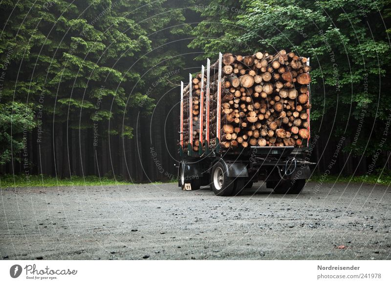 Nature Plant Forest Work and employment Wood Lanes & trails Environment Transport Stand Profession Truck Agriculture Harvest Tree trunk Sustainability Forestry