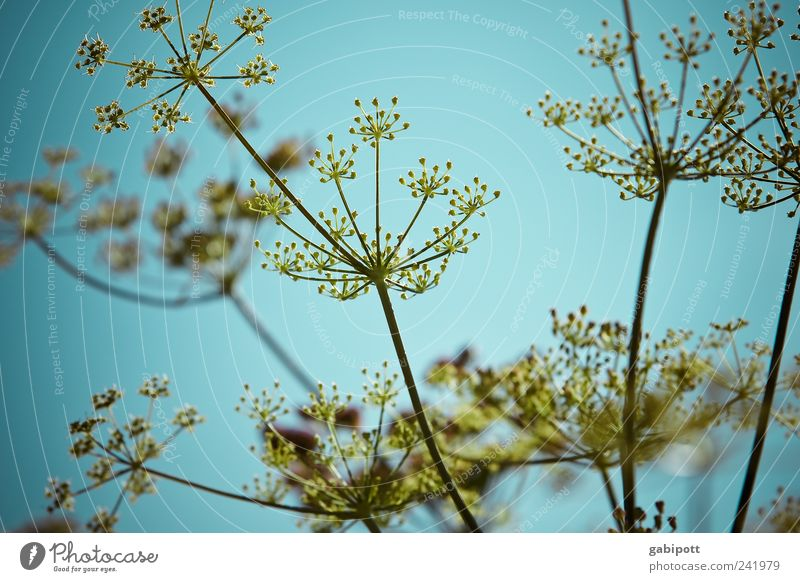 Nature Sky Blue Plant Summer Yellow Blossom Garden Park Landscape Field Happiness Bushes Point Blossoming Easy