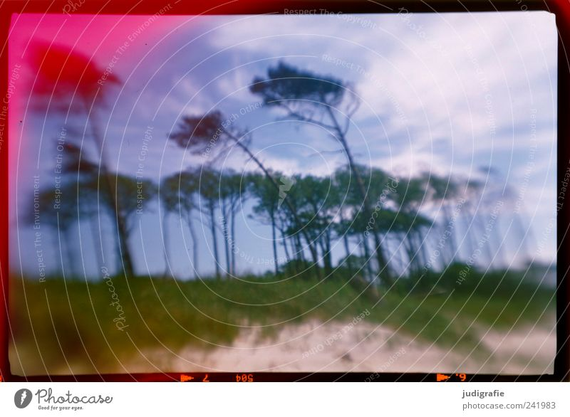 western beach Environment Nature Landscape Plant Sky Clouds Coast Baltic Sea Darss Western Beach Exceptional Natural Wild Moody Wind cripple Analog Colour photo