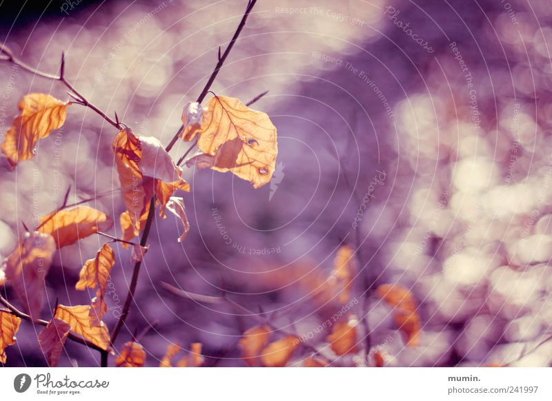Nature Tree Plant Leaf Yellow Warmth Autumn Brown Gold Violet