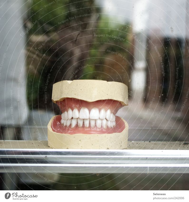 say cheese Dentist Human being Mouth Teeth Plastic Smiling Funny Near White Shop window Colour photo Copy Space top Shallow depth of field