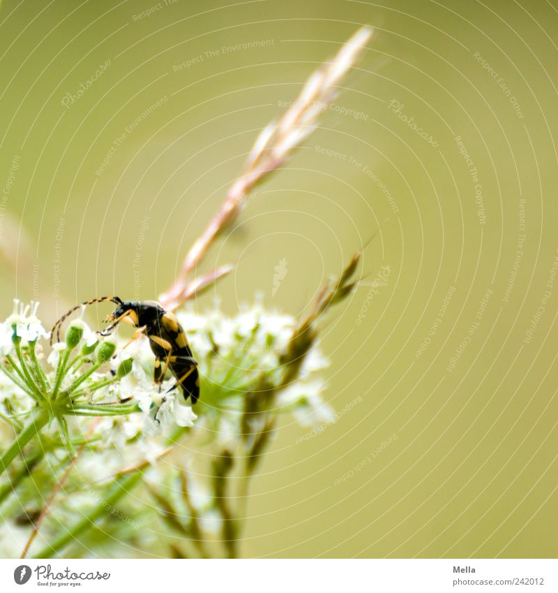Nature Flower Green Plant Animal Meadow Blossom Grass Environment Natural Blade of grass Beetle Crawl Wild plant Panicle blossom