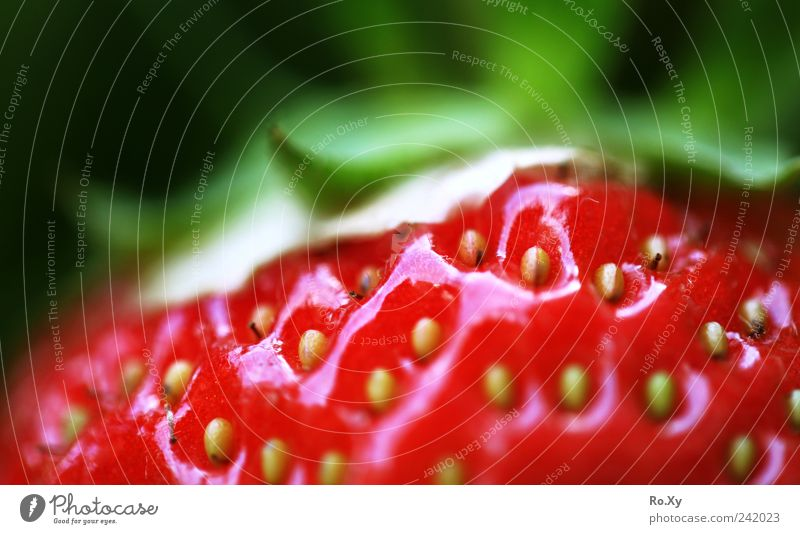 Such a sweet little fruit! Fruit Nature Plant Earth Summer Blossoming Growth Fragrance Fresh Delicious Green Red Fruity Juicy Healthy Strawberry Berries