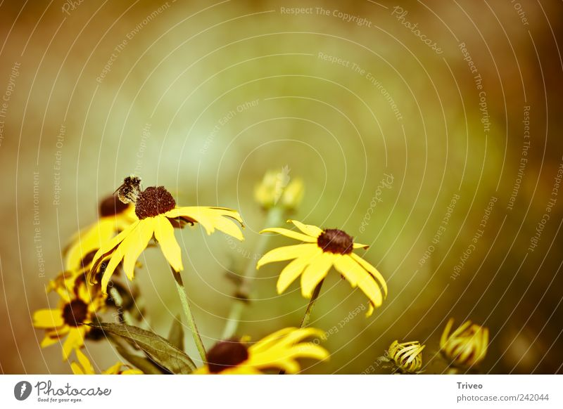 Bee on flower Spring Plant Flower Animal Insect Blossoming Fragrance Flying Brown Yellow Gold Spring fever Determination Elegant Mobility Collection Honey bee