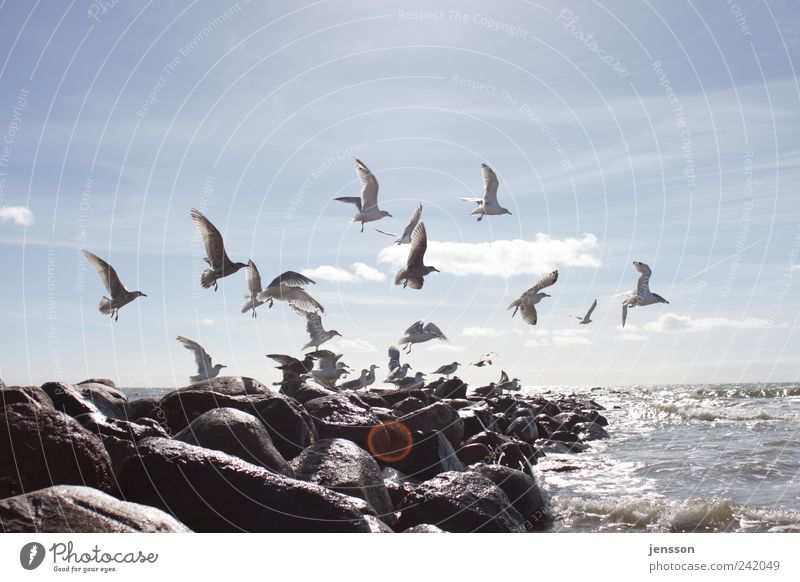 I'm good to birds. Ocean Environment Nature Animal Sky Clouds Coast Beach North Sea Bird Group of animals Flock Flying Bright Natural Wild Movement Freedom