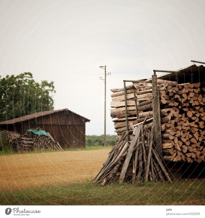 firewood Nature Landscape Sky Summer Plant Tree Grass Foliage plant Agricultural crop Wild plant Field Hut Building Electricity pylon Wood Natural Firewood