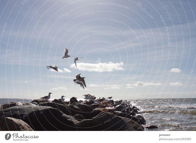 Sky Nature Blue Ocean Beach Clouds Animal Far-off places Environment Freedom Movement Coast Stone Bright Bird Horizon