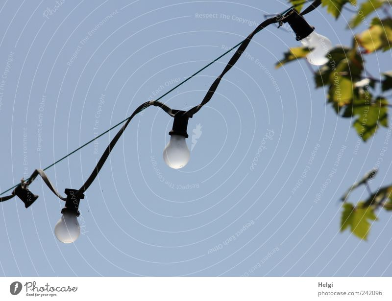 the last of their kind... Cable Electric bulb Bracket Rope Technology Energy industry Cloudless sky Summer Beautiful weather Plant Leaf Vine Hang Illuminate
