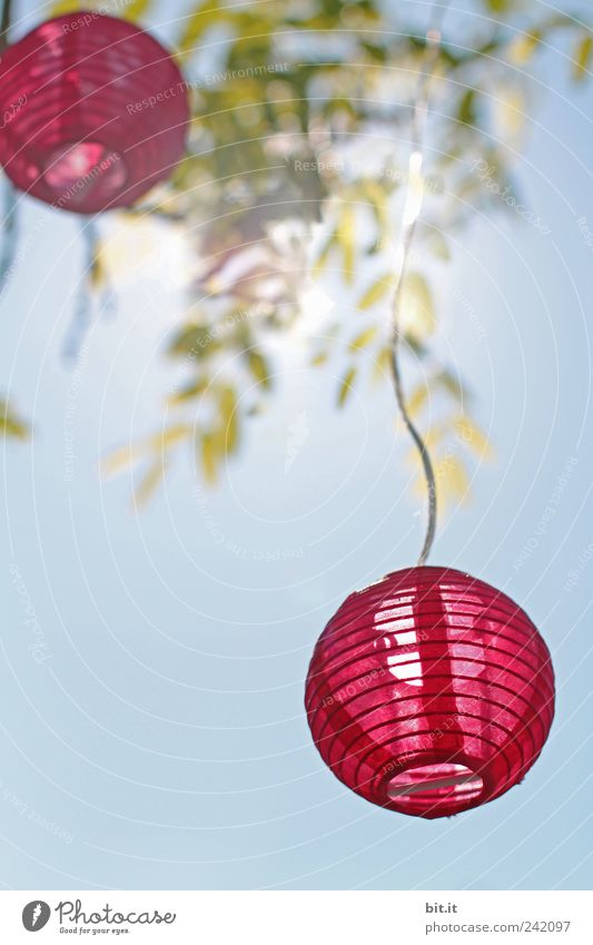 light balls Garden Lamp Entertainment Event Feasts & Celebrations Valentine's Day Mother's Day Wedding Cable Air Sky Spring Summer Beautiful weather Hang