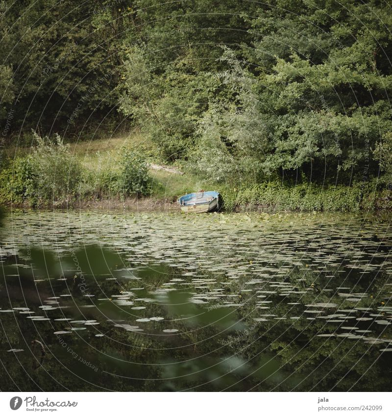 boat Nature Landscape Plant Tree Grass Bushes Foliage plant Wild plant Lake Rowboat Natural Green Colour photo Exterior shot Deserted Day