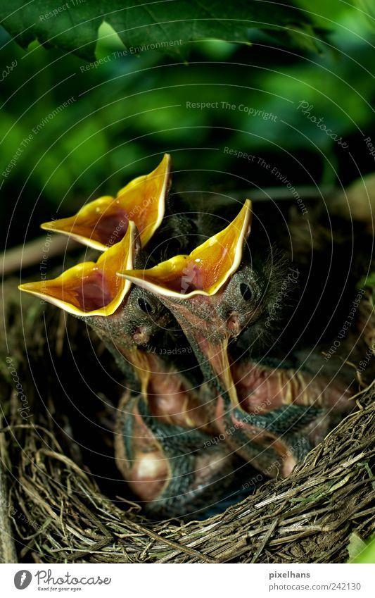 Nature Green Plant Leaf Animal Black Yellow Environment Brown Baby animal Bird Together Wait Crazy Wild animal Bushes