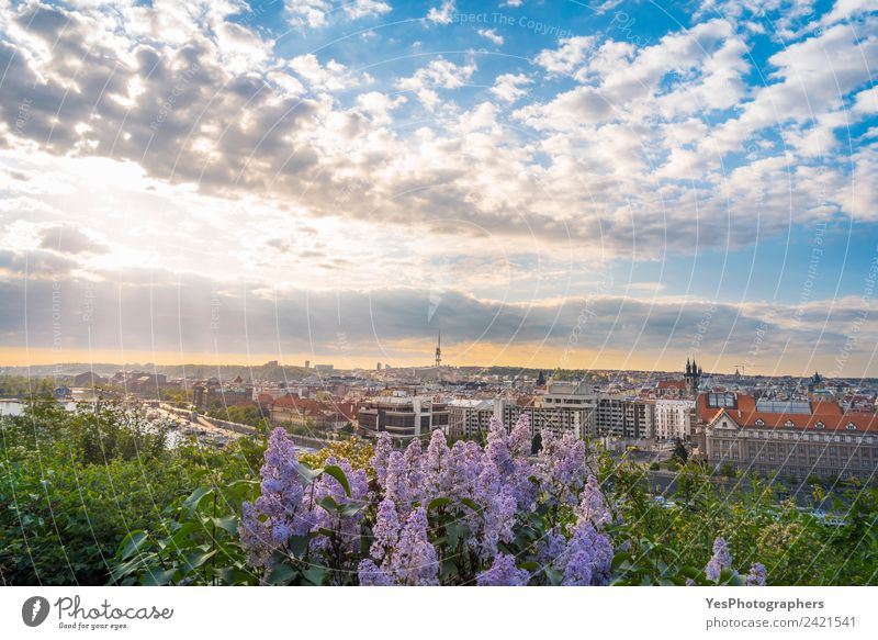 Sunrise over Prague city and lilac flowers Lifestyle Beautiful Vacation & Travel Summer Art Landscape Old town Bridge Building Architecture Tourist Attraction