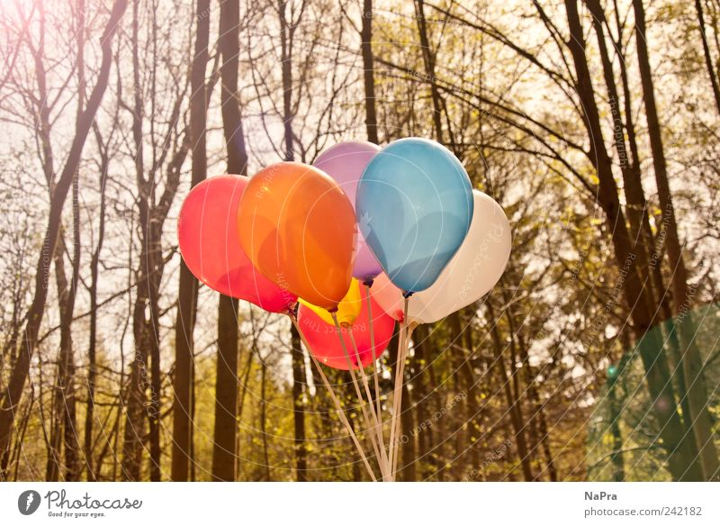 Nature Tree Joy Summer Forest Relaxation Environment Wood Happy Spring Park Feasts & Celebrations Contentment Growth Balloon Joie de vivre (Vitality)