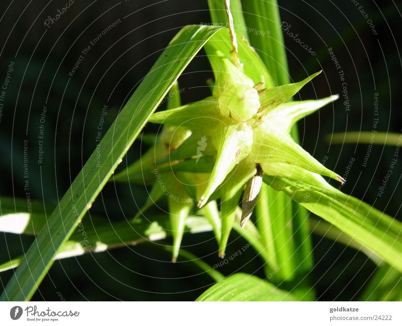 Green Plant Leaf Garden Blossom Park Natural Star (Symbol) Exceptional Point Exotic Thorny Foliage plant Evening sun Nature