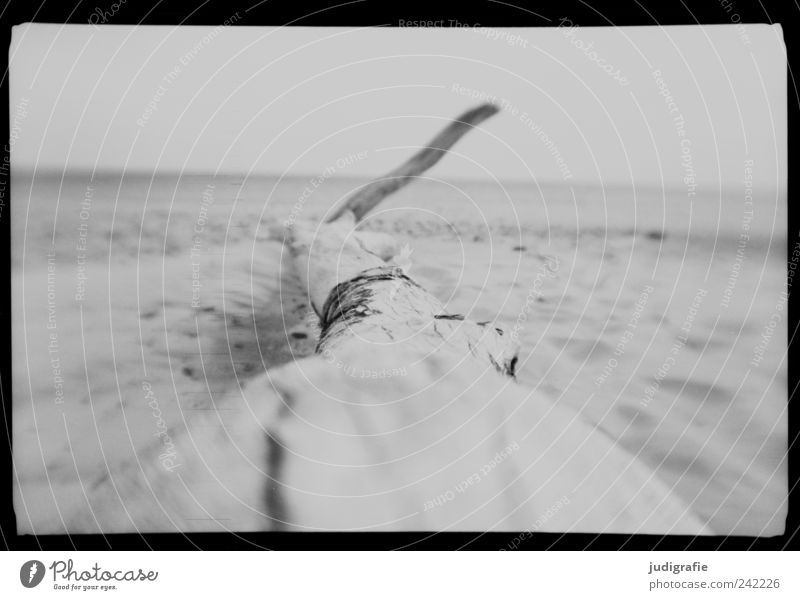 Nature White Tree Ocean Beach Calm Black Death Gray Sand Landscape Moody Coast Environment Transience Wild