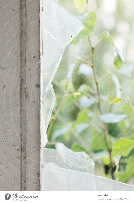 Nature Old Leaf Window Glass Broken Ruin Window pane Destruction Fragile Pane Window frame Smashed window