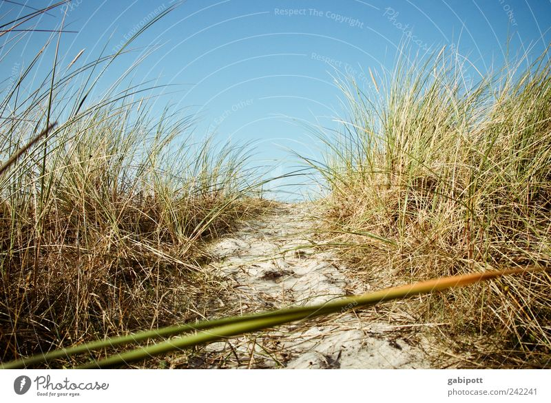a breath of sea air Environment Nature Landscape Plant Sand Sky Cloudless sky Summer Beautiful weather Grass Bushes Coast Beach North Sea Baltic Sea Beach dune