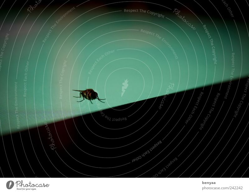 Green Loneliness Animal Colour Sit Wait Flying Dangerous Wild animal Insect Screen Crawl Fear of flying Digital