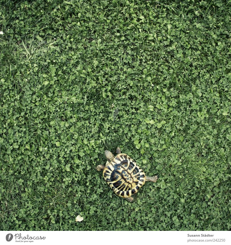 Karli and the clover Earth Garden Meadow Animal Pet Zoo Petting zoo 1 Baby animal Hunting Clover Cloverleaf Turtle Tortoise-shell Shell Elapse Freedom Going out