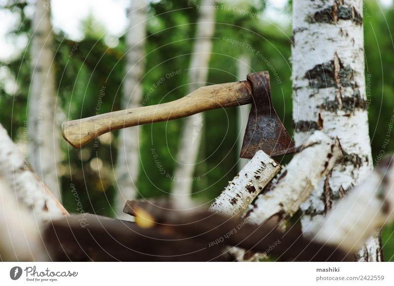 chopping birch tree with axe for firewood Save Garden Work and employment Industry Axe Nature Tree Grass Forest Wood Natural Wild Brown Green Chop Cut