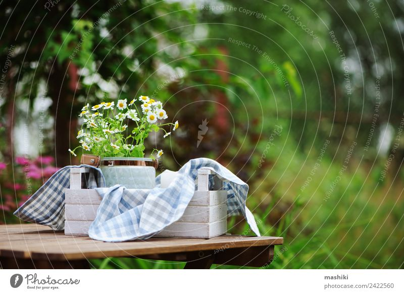 Beautiful summer scene with bouquet of chamomile flowers Leisure and hobbies Summer Garden Decoration Table Nature Plant Flower Cloth Growth Fresh Bright