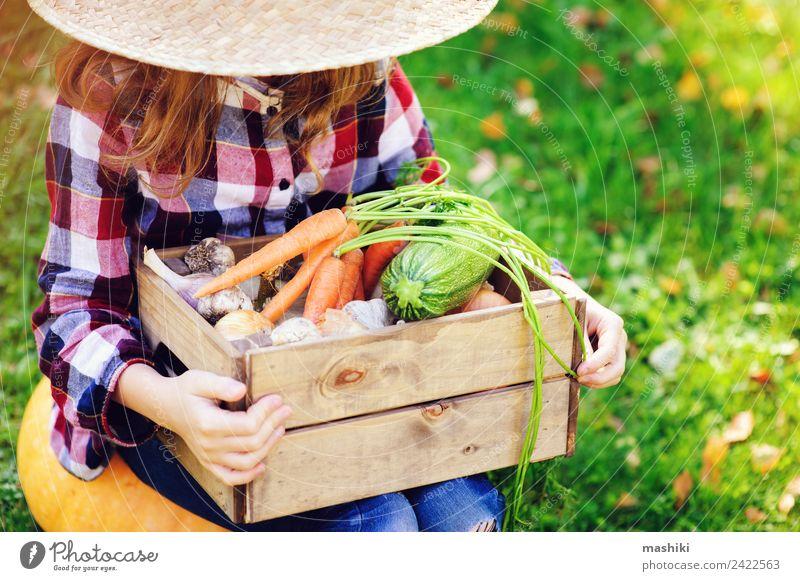 happy farmer child girl picking autumn harvest Child Nature Green Landscape Joy Lifestyle Autumn Natural Family & Relations Growth Fresh Vegetable Seasons Farm