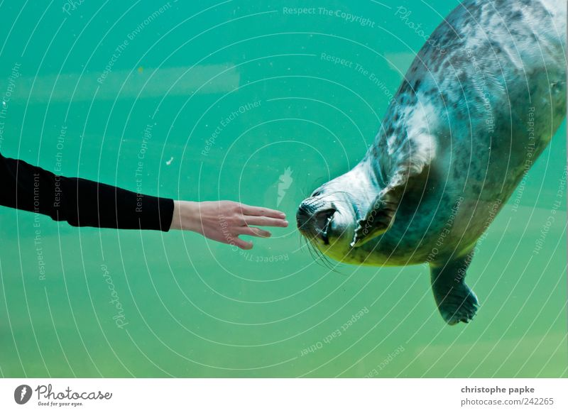 Give me two fingers Animal Zoo Aquarium 1 Swimming & Bathing Cute Harbour seal Caress Effortless Following Touch Colour photo Subdued colour Interior shot