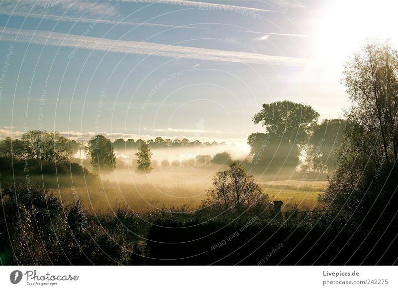 Nature Tree Meadow Landscape Moody Field Fog Bushes Beautiful weather Lakeside To enjoy Dawn Sunset Purity Sunrise