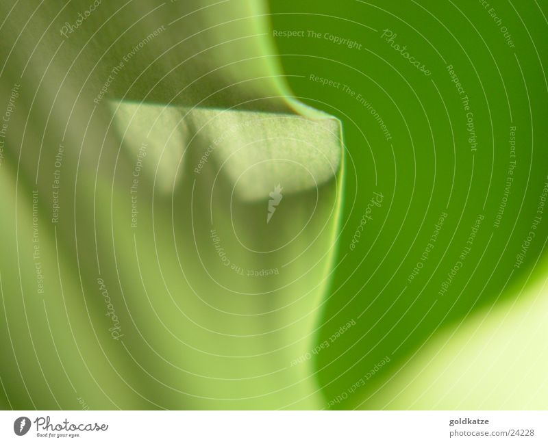 Green Plant Leaf Colour Background picture Soft Swing