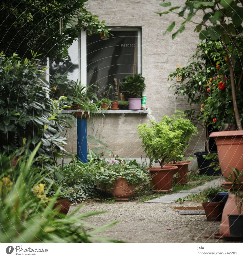 Green Beautiful Flower House (Residential Structure) Architecture Gray Building Bushes Manmade structures Foliage plant Detached house Light Pot plant