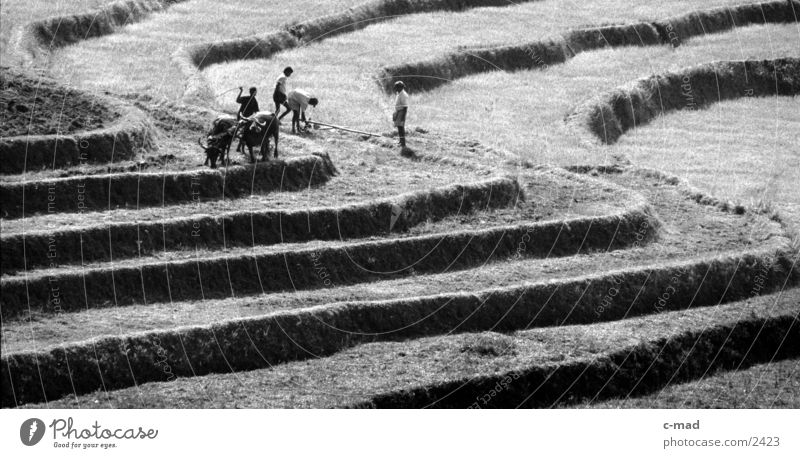 Rice terraces in Sri Lanka Work and employment Mountain Human being Black & white photo