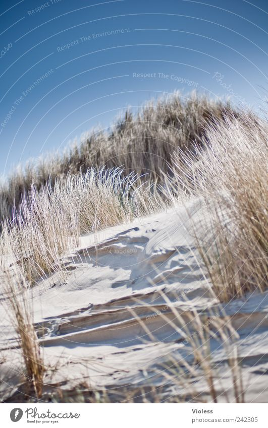 Spiekeroog. The dune calls. Nature Landscape Sand Beach North Sea Discover Relaxation Blue Island vacation Dune Marram grass Bright Colour photo Exterior shot