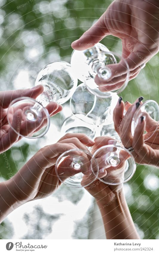 Human being Green White Hand Life Group Friendship Feasts & Celebrations Together Glass Birthday Authentic Fresh Happiness Drinking Fluid