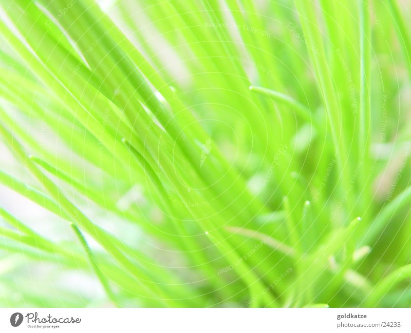 Nature Green Plant Summer Leaf Nutrition Grass Garden Food Spring Healthy Fresh Natural Growth Kitchen Cooking & Baking