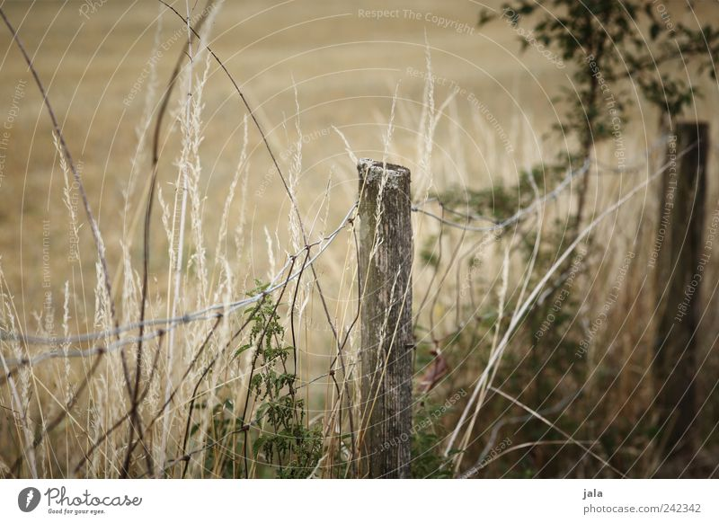 fence Nature Plant Grass Bushes Wild plant Field Fence Fence post Natural Green Beige Colour photo Exterior shot Deserted Day