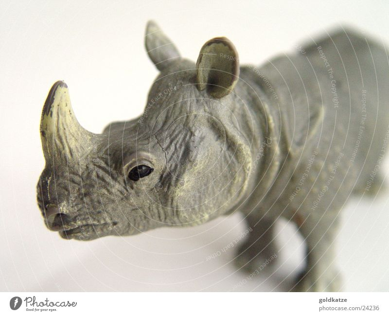 rhinoceros Exotic Playing Zoo Animal Wild animal Rhinoceros 1 Toys Plastic Fight Threat Strong Gray Power Unwavering Dangerous Infancy Nature Environment Anger
