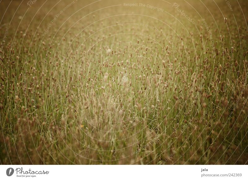 Nature Beautiful Flower Green Plant Meadow Grass Gold Wild plant