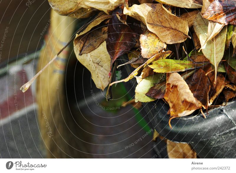 Old Plant Leaf Work and employment Autumn Garden Gray Stone Brown Gold Energy Transience Cleaning Terrace Craftsperson Completed