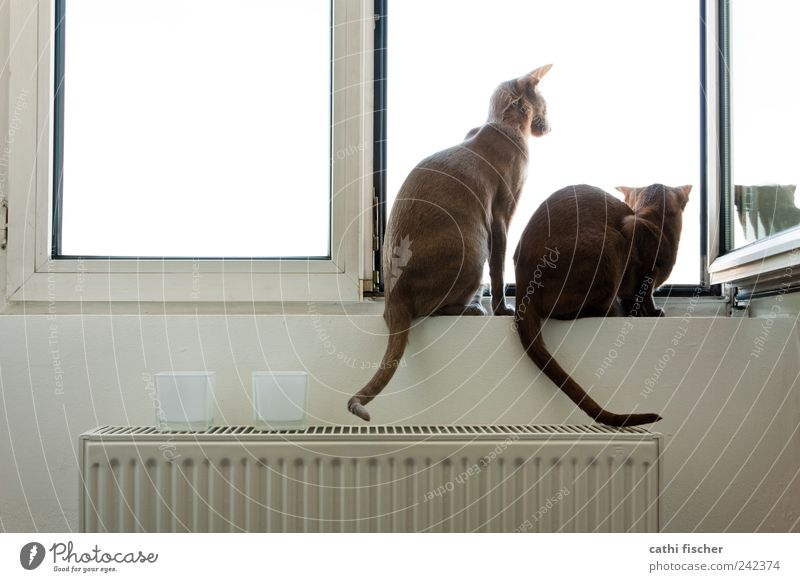 White Animal Far-off places Wall (building) Window Wall (barrier) Cat Think Brown Together Metal Wait Pair of animals Glass Sit Hope
