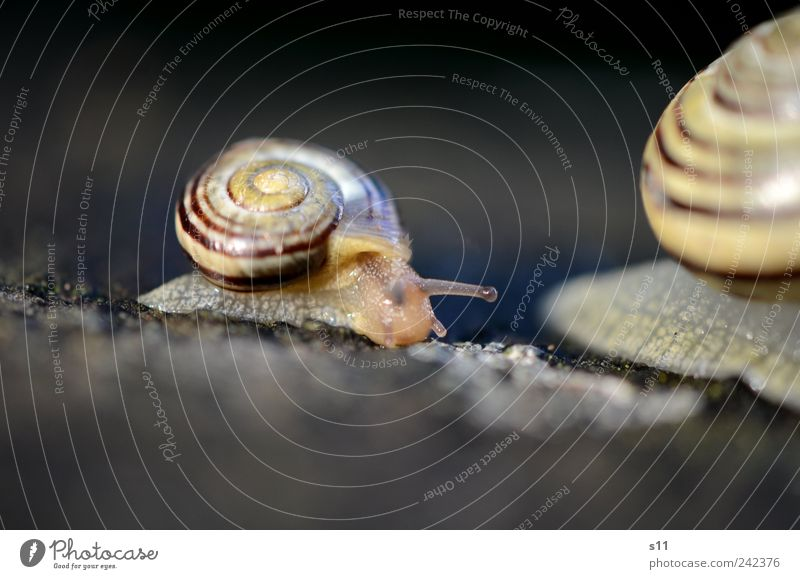 Mom, please don't go so fast! Animal Snail 2 Baby animal Living or residing Snail shell Creep Gain favor Crawl Spiral Line Slimy Suck-up Rain Feeler