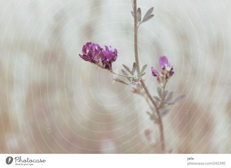 Nature Flower Green Plant Leaf Meadow Blossom Bright Esthetic Violet Beige Wild plant