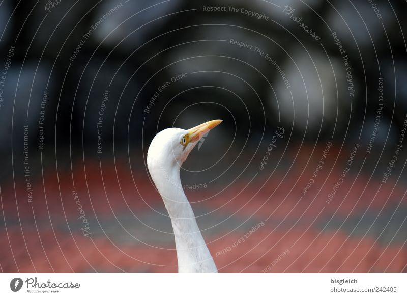 White Eyes Animal Bird Animal face Neck Beak