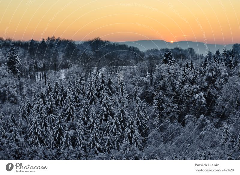 If it were winter now Sun Winter Snow Environment Nature Landscape Elements Sky Cloudless sky Sunrise Sunset Sunlight Weather Beautiful weather Tree Hill