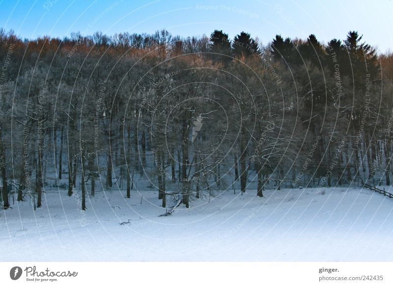 winter morning atmosphere Environment Nature Landscape Plant Sky Winter Climate Weather Beautiful weather Ice Frost Snow Tree Forest Growth Hiking Cold