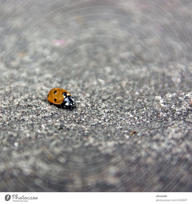 Loneliness Animal Life Happy Stone Contentment Concrete Hope Happiness Good Beetle Ladybird