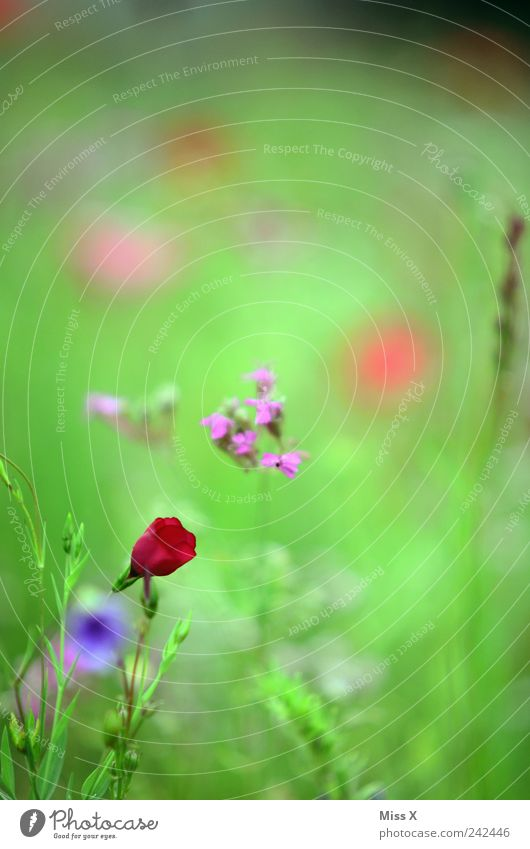 red spot Nature Plant Spring Summer Flower Leaf Blossom Meadow Blossoming Fragrance Growth Wild Red Flower meadow Colour photo Multicoloured Close-up Deserted