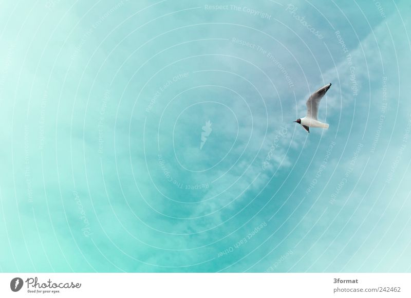 Sky Nature Blue Plant Summer Beach Vacation & Travel Ocean Clouds Far-off places Animal Freedom Happy Coast Air Bird