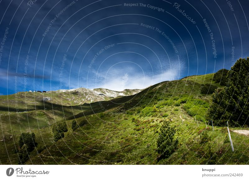 2000 m.a.s.l. Environment Nature Landscape Sky Cloudless sky Sunlight Summer Beautiful weather Grass Bushes Wild plant Alps Mountain Peak Hiking Gigantic Large